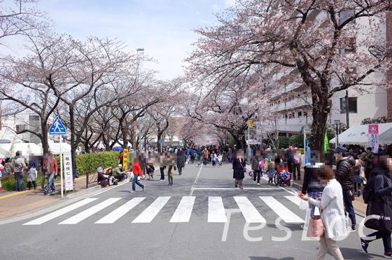 宮崎台桜まつりの桜並木