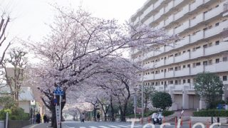 宮崎台の桜並木満開時上から