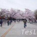 城南地域の歩き花見🌸なら【東京工業大学+洗足池】の組み合わせがオススメ!