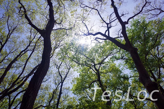 東高根森林公園のピクニック広場上空