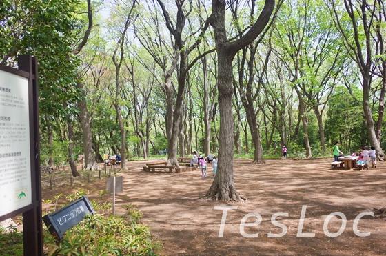 東高根森林公園のピクニック広場