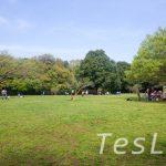 住宅地のど真ん中に、県天然記念物まである自然あふれる公園【東高根森林公園】