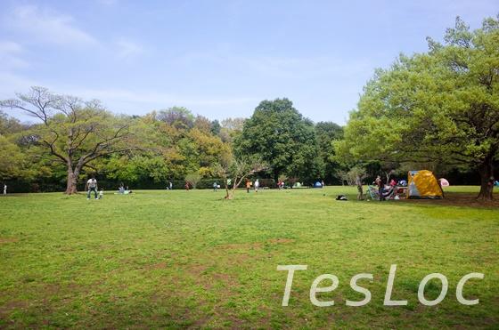 東高根森林公園の古代芝生広場