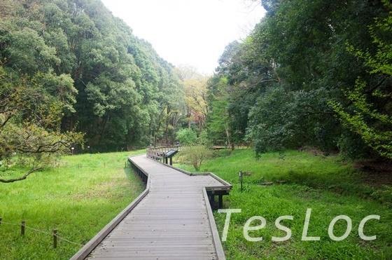 東高根森林公園の湿生植物園