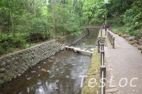 等々力渓谷の欄干のない橋