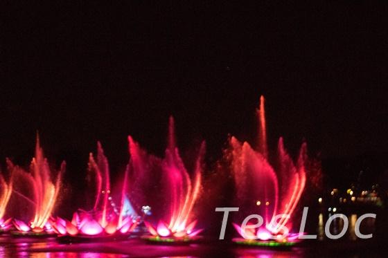 アニマルキングダムRivers of Light蓮の噴水