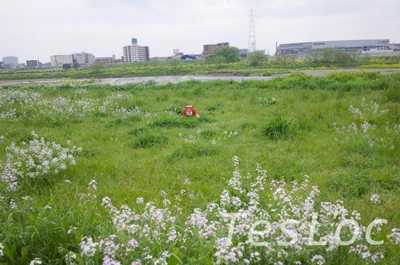 多摩川の川原の様子