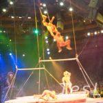 生歌+サーカス+バレエ+ファイヤーダンス+ディズニーの最強布陣! 【フェスティバル・オブ・ライオンキング】at アニマル・キングダム