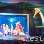 巨大パペットも登場して大迫力! 【ファインディング・ニモ・ミュージカル】at アニマル・キングダム