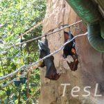 たくさんの動物がいる遺跡を探検! 【マハラジャ・ジャングル・トレック】at アニマル・キングダム
