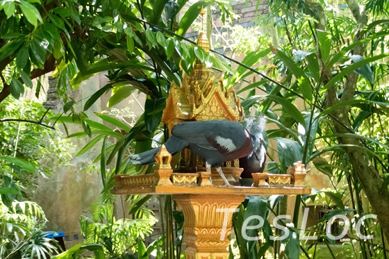WDWアニマル・キングダム「マハラジャ・ジャングル・トレック」寺院鳥