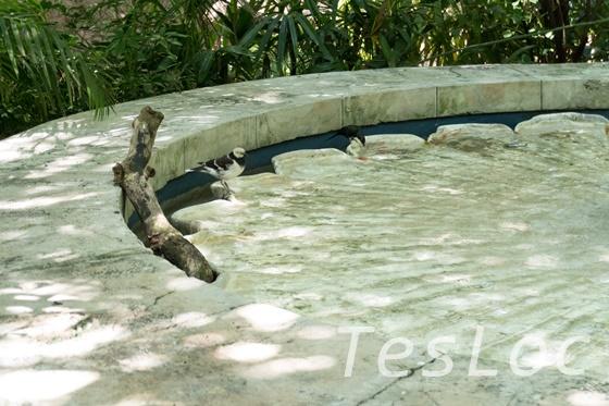 WDWアニマル・キングダム「マハラジャ・ジャングル・トレック」水場鳥
