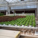 ディズニーが作った植物工場を見学! 【リビング・ウィズ・ザ・ランド】in エプコット