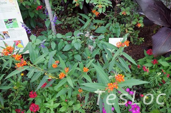 WDWエプコット「フラワー&ガーデンフェスティバル」温室内の草花